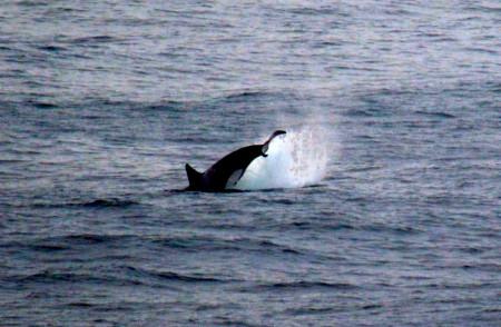 Halibut fishing oregon coast 2015 season autos post for Oregon coast fishing report