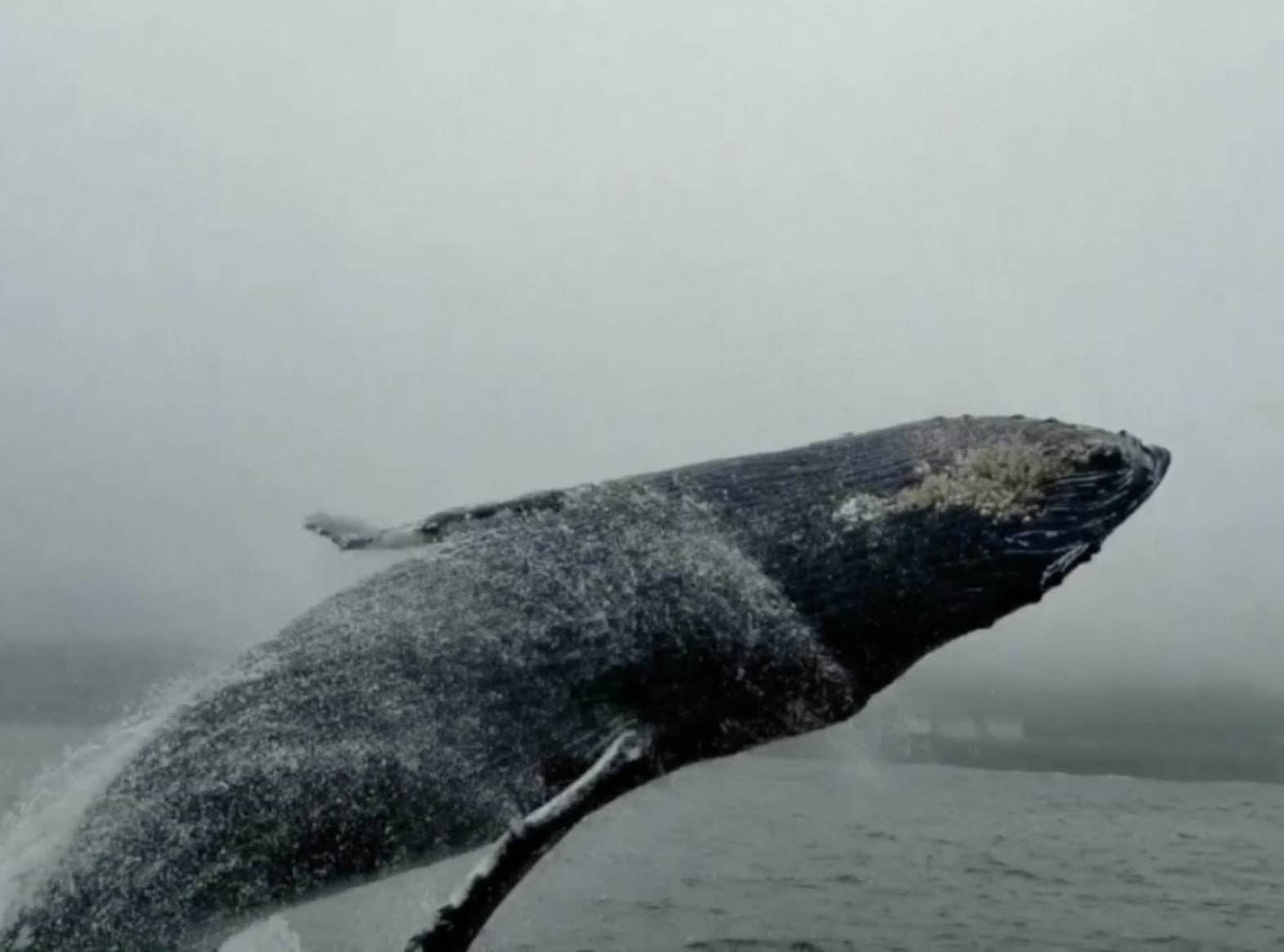 Gray Whale Watching