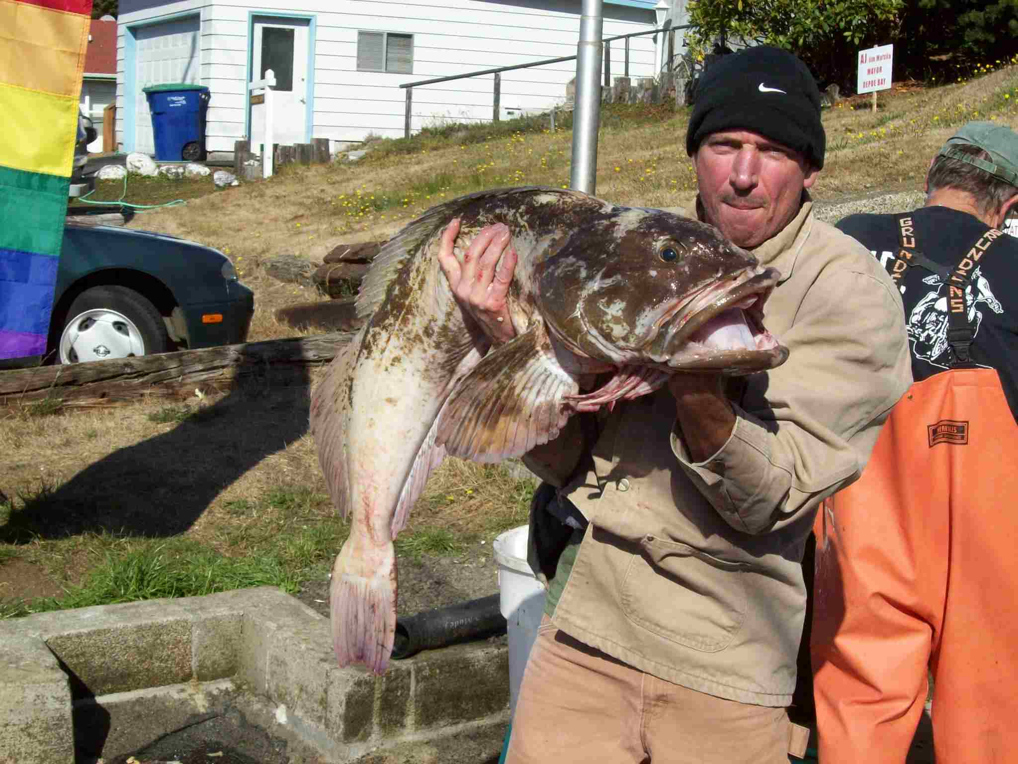 FOURTY POUNDS OF LING COD