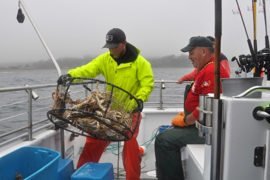 tuna fishing chartersJake on the Tacklebuster bringing in a full pot of crab