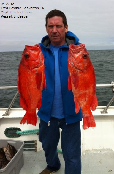 Two Great Vermillion Rockfish
